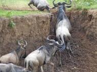blog7-40 Masai Mara