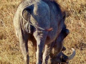 blog9-11 warthog