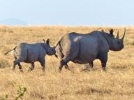 blog9-15 rhino