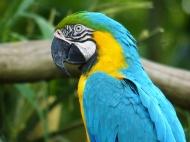 01 Singapore birdpark