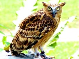 03 Singapore birdpark