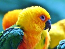 Singapore Birdpark