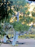 04a Alice Springs 8 Simpsons Gap