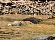 05b crocodiles01