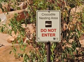 05b crocodiles02