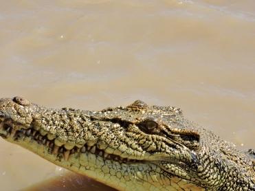 05b crocodiles04