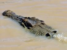 05b crocodiles05