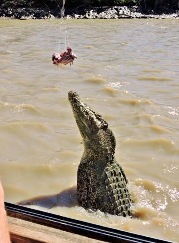 05b crocodiles08