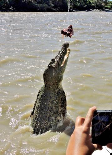 05b crocodiles09