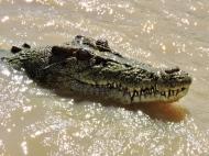 05b crocodiles10