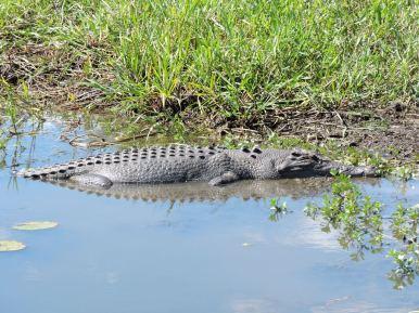 05b crocodiles12