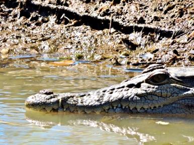 05b crocodiles13