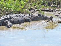 05b crocodiles14