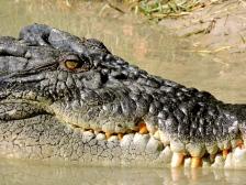 05b crocodiles16