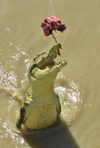 05b crocodiles17