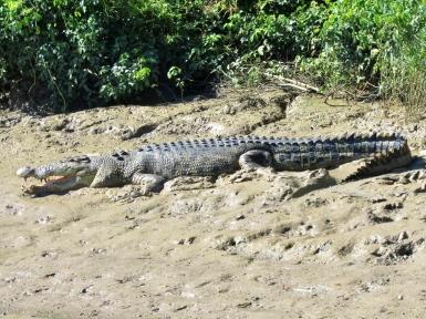 05b crocodiles18