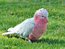 05c birds01