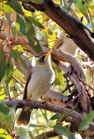 05c birds02