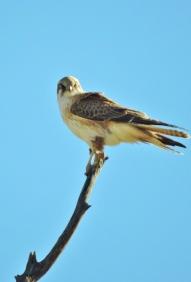 05c birds03