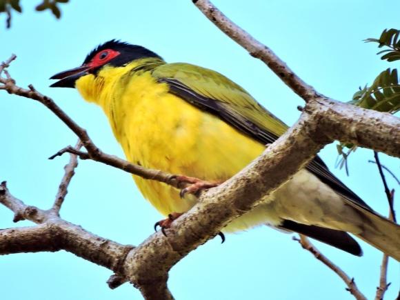 05c birds16