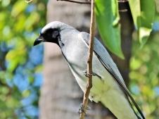 05c birds19