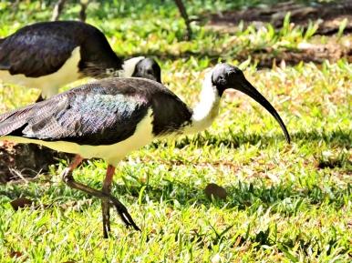 05c birds21