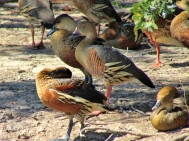 05c birds24