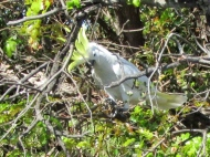 05c birds25