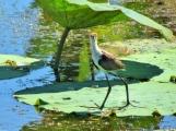 05c birds27