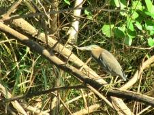 05c birds28
