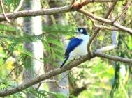 05c birds29