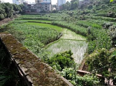 08-27 Yangtze