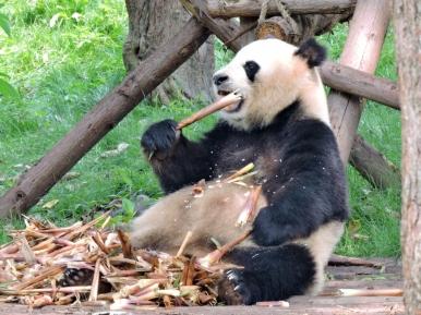 09-47 Chengdu