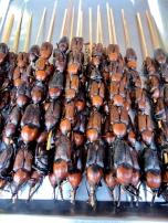 12-24 Beijing BBQ - beetles