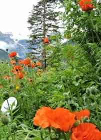 02-10 Banff - Lake Louise