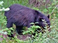 02-30 wildlife