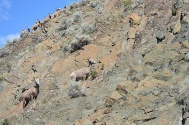 03-10 Rocky Mountaineer-John Lawson photo