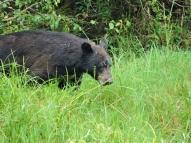 05-10 bear-hunt