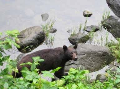 05-12 bear-hunt