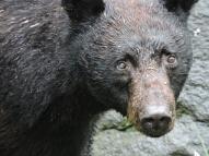 05-13 bear-hunt