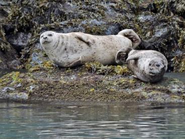 07-24 Kenai Fjords