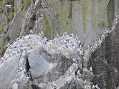 07-26 Kenai Fjords