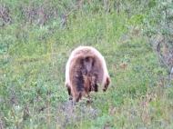 A bear behind!