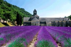 08-26-notre-dame-de-senanque-in-lavender-season-984x647