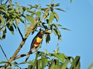 08-02 Iguazu - seen from our hotel (800x600)
