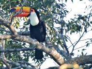 08-03 Iguazu - seen from our hotel (800x600)