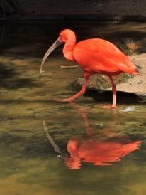 08-32 Parque das Aves (600x800)