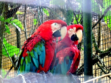 08-33 Parque das Aves (800x600)