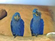 08-34 Parque das Aves (800x601)
