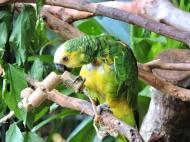 08-35 Parque das Aves (800x600)
